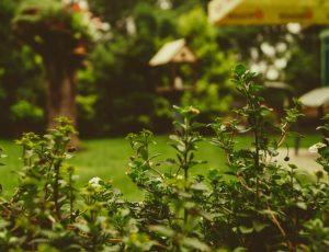 garden photo- martin unsplash